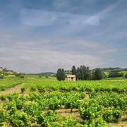 Rasteau - vallée de l'Ouvèze et cabanon